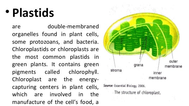 Plant & animal cell for discussion