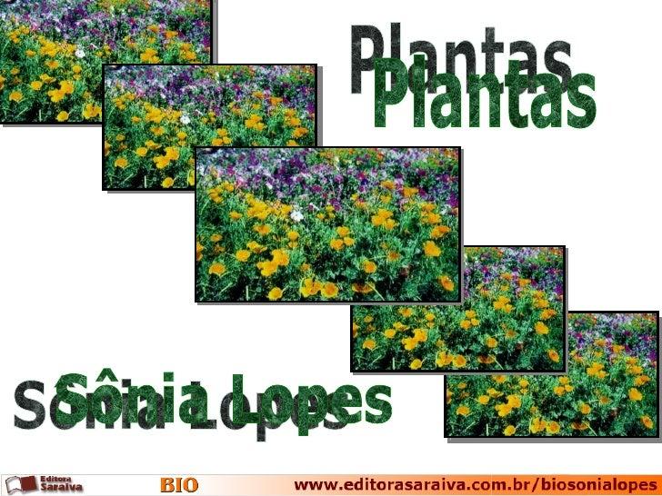 Plantas Sônia Lopes