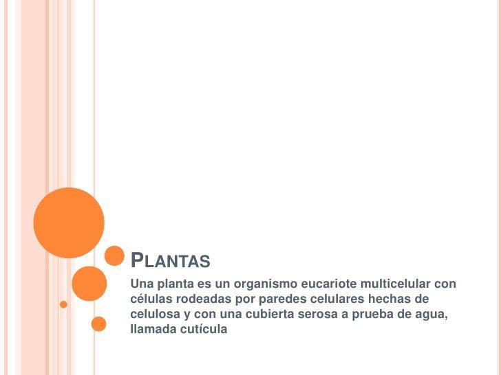 Plantas<br />Una planta es un organismo eucariote multicelular con células rodeadas por paredes celulares hechas de celulo...
