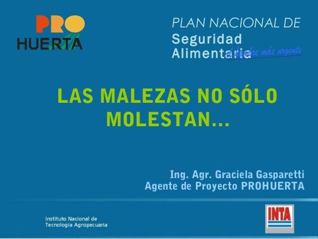 PLAN NACIONAL DE Seguridad Alimentaria LAS MALEZAS NO SÓLO MOLESTAN… Ing. Agr. Graciela Gasparetti Agente de Proyecto PROH...