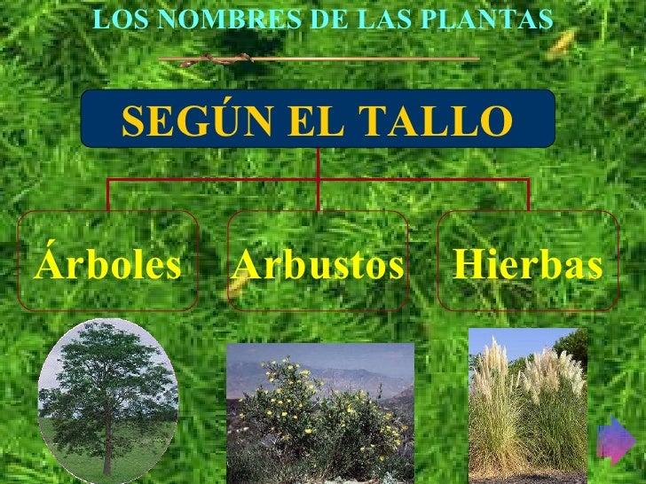 Las plantas - Nombres de arbustos ...