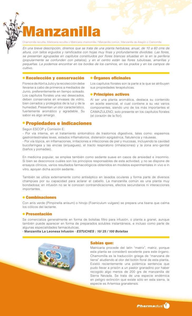 ManzanillaChamomilla recutita, Matricaria recutita o Matricaria chamomilla / Manzanilla común, Manzanilla de Aragón o Camo...