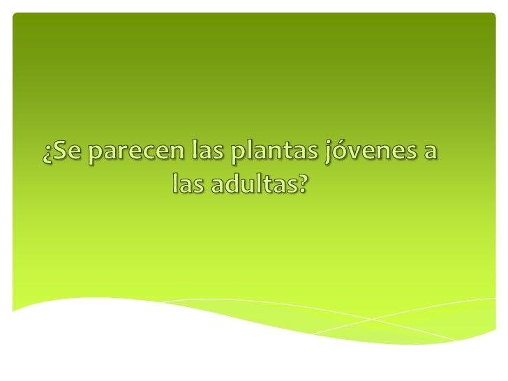 ¿Qué plantas conocen?                        ¿Cómo es?