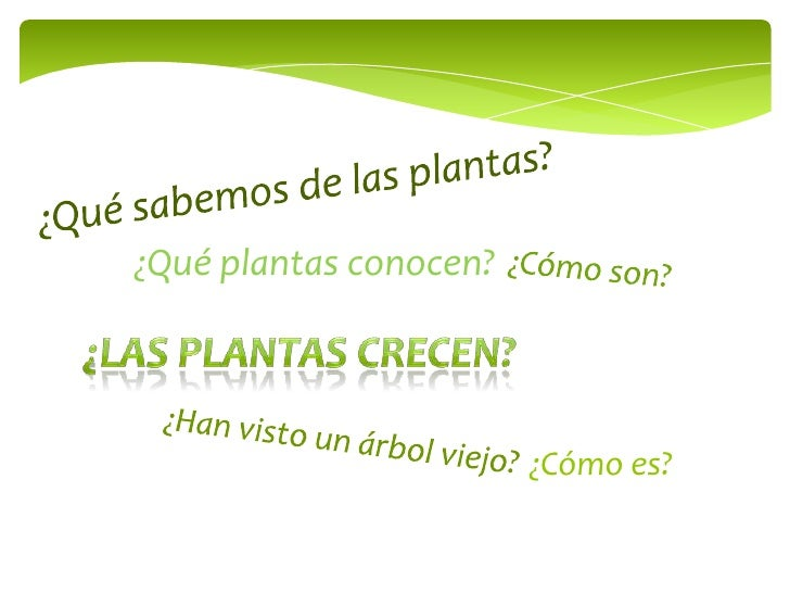 Plantas jóvenes - adultas Slide 2