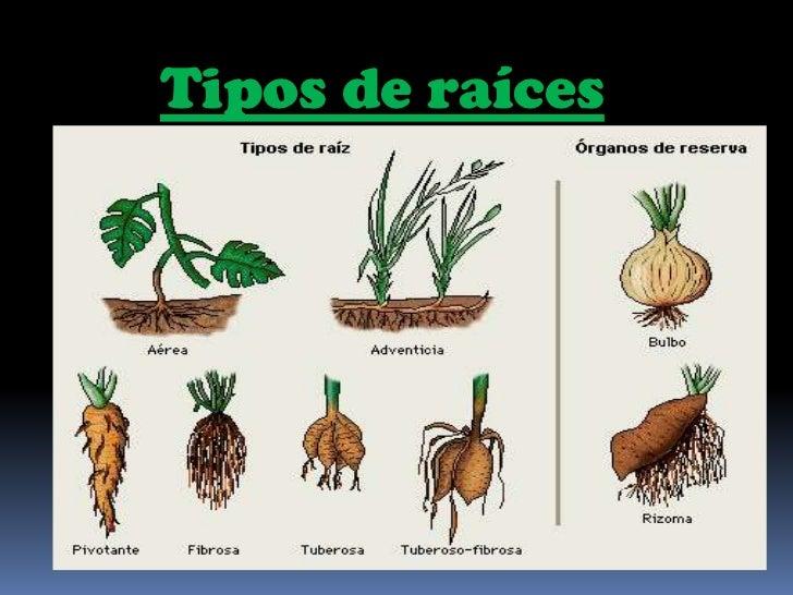 Plantas por viviana s nchez for Cuales son los tipos de plantas