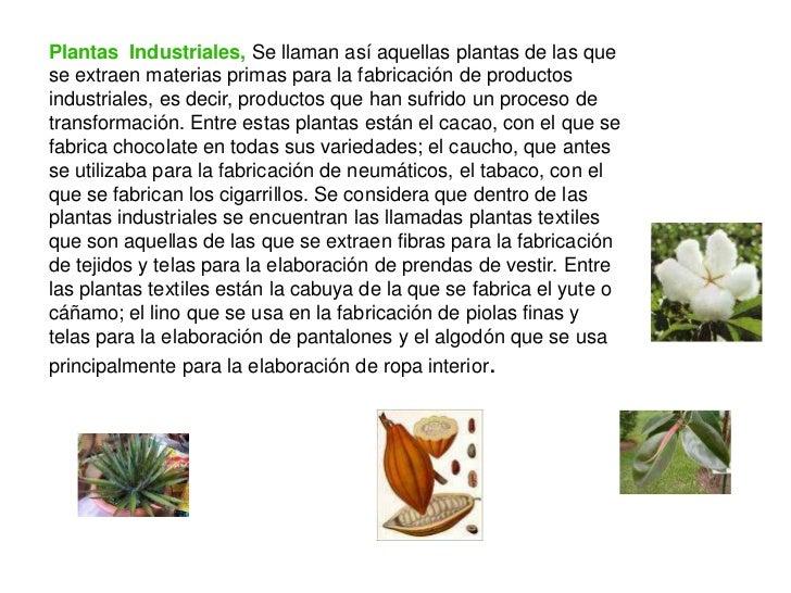 Plantas for Todas las plantas ornamentales