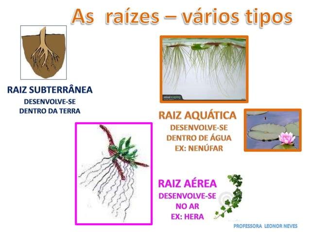 A resina do pinheiro (cola, verniz, tinta…) O sobreiro dá cortiça (rolhas, malas …) A oliveira dá azeitonas (azeite)
