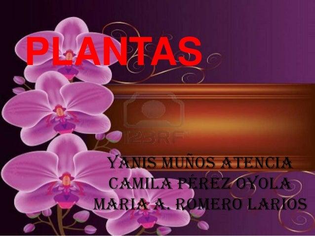 PLANTAS   Yanis Muños Atencia   Camila Pérez oyola  Maria A. romero Larios