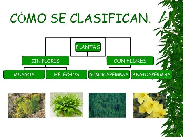 Plantas - Cosas sobre las plantas ...