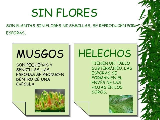 Plantas for Plantas sin semillas