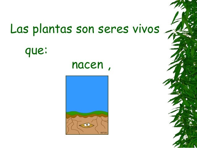 Plantas Slide 2