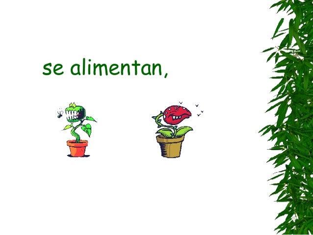 Plantas Slide 3