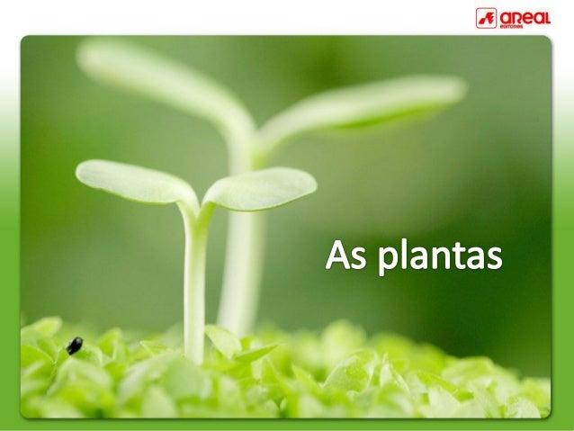Umaplantacompletaéformadaporraiz,caule,folhas,florefruto.