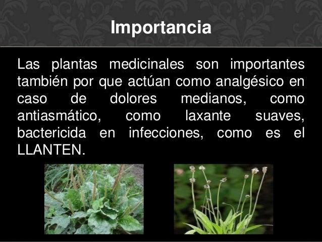 Plantas medicinales - Informacion sobre el eucalipto ...