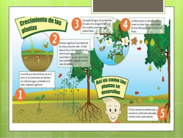 Las plantas y sus funciones for Funcion de las plantas ornamentales