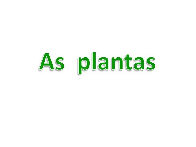 Que dá origem ao fruto Por onde a planta se alimenta. Caule Mantém a planta direita e transporta os nutrientes a todas as ...