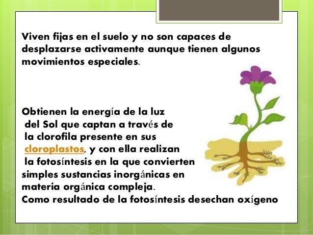 Caracteristicas de las plantas y piedras for Cuales son las partes de un arbol
