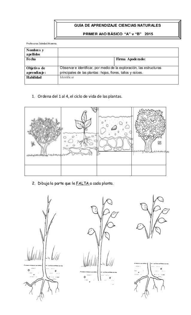 Increíble Hoja Ciclo De Vida De Las Plantas Adorno - hojas de ...