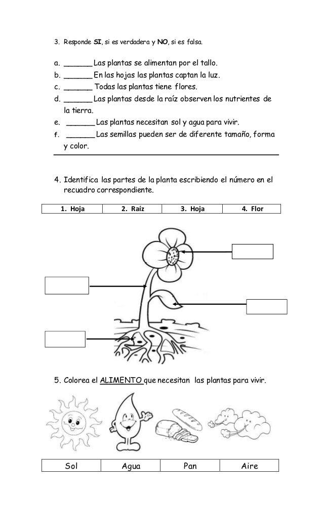 Famoso Lo Que Necesitan Las Plantas Para Crecer Ks1 Hoja Of Trabajo ...