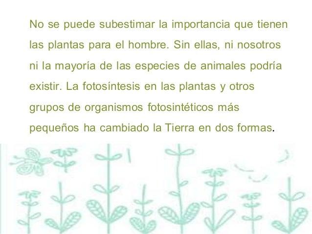 Plantas for Importancia de las plantas ornamentales