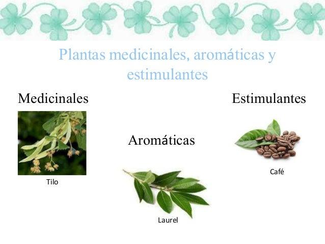 Plantas for Plantas medicinales y ornamentales