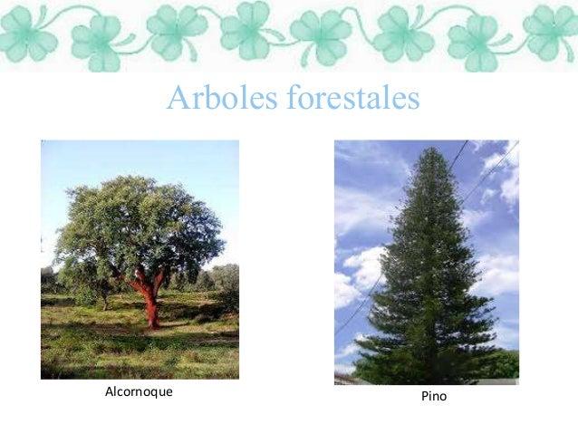 Plantas for Tipos de plantas forestales