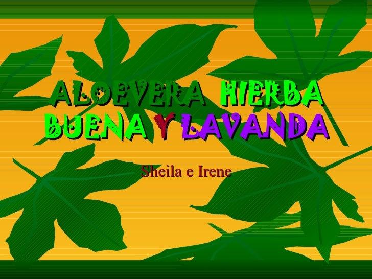 ALOEVERA HIERBA BUENA Y LAVANDA      Sheila e Irene