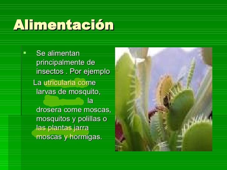 Plantas carnivoras 1 for Como se planta la lavanda