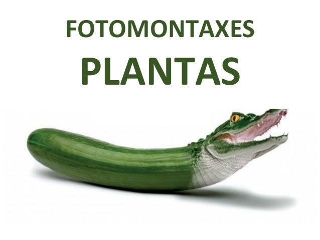FOTOMONTAXES PLANTAS