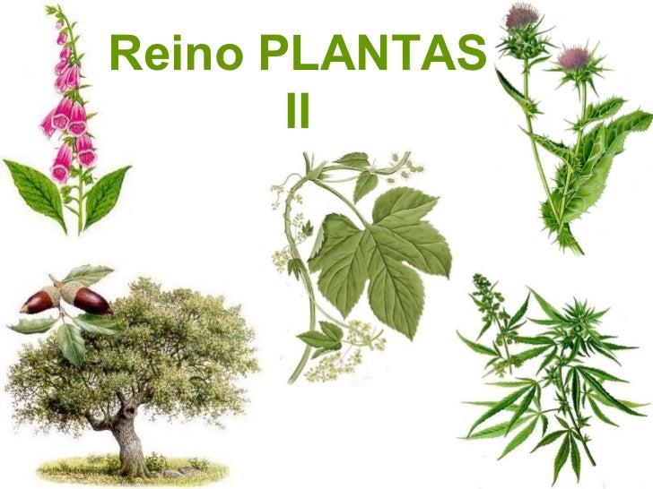 plantas iijk