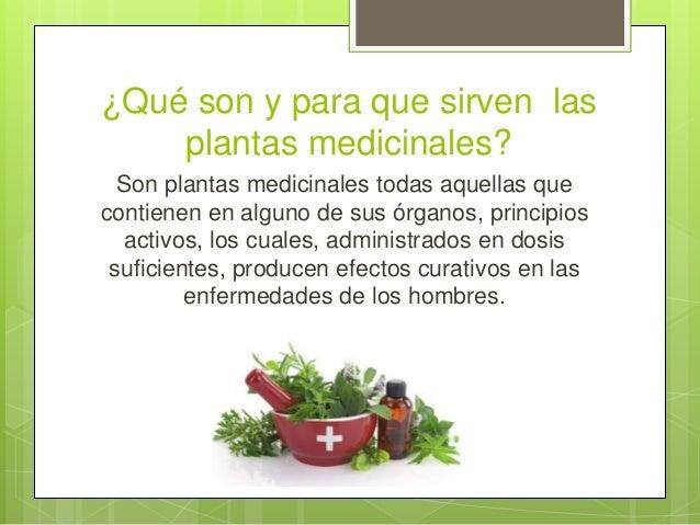 Plantas medicinales en mexico presentacion final for Para q sirven las plantas ornamentales
