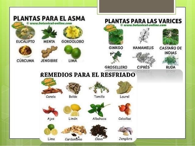 Plantas medicinales en mexico presentacion final for Tipos de hierbas medicinales
