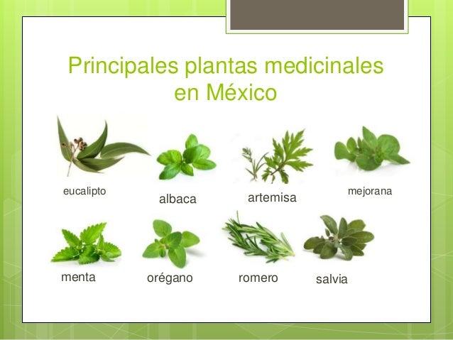 Plantas medicinales en México