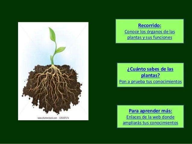 Recorrido: Conoce los órganos de las plantas y sus funciones ¿Cuánto sabes de las plantas? Pon a prueba tus conocimientos ...