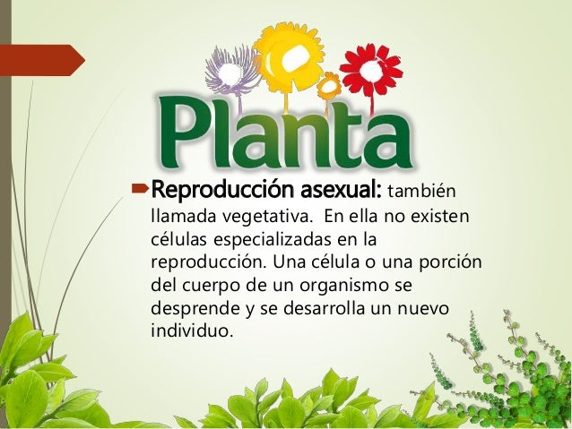 Reproduccion asexual de las plantas por injerto de piel