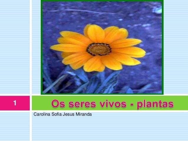1    Carolina Sofia Jesus Miranda