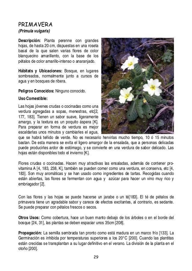 Plantas y-frutos-silvestres-comestibles