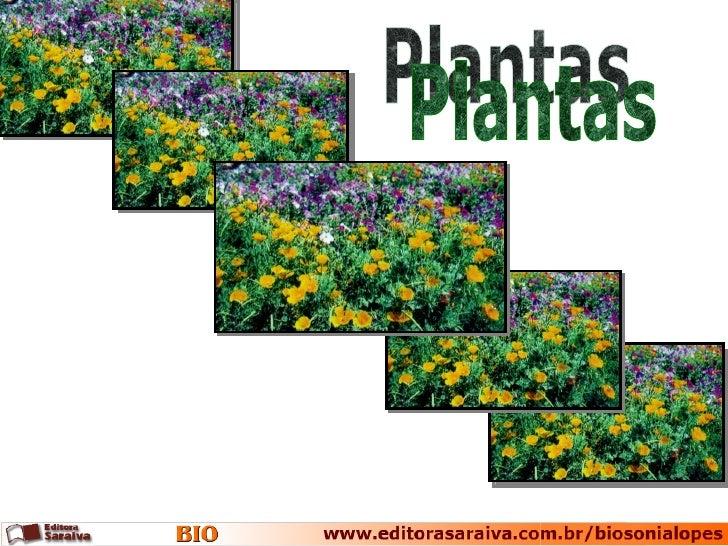 Relações filogenéticas                                         Embriófitas                                      Traqueófit...