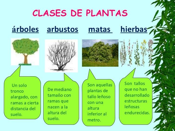 Plantas150ok - Nombres de arbustos ...