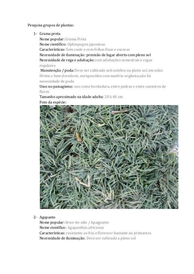 Pesquisa grupos de plantas: 1- Grama preta Nome popular: Grama Preta Nome científico: Ophiopogon japonicus Características...