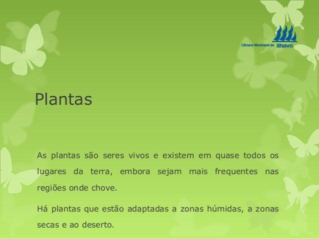 Plantas As plantas são seres vivos e existem em quase todos os lugares da terra, embora sejam mais frequentes nas regiões ...
