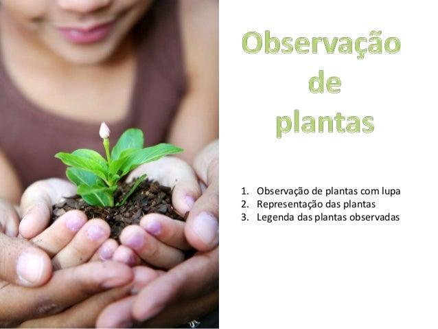 1. Observação de plantas com lupa2. Representação das plantas3. Legenda das plantas observadas