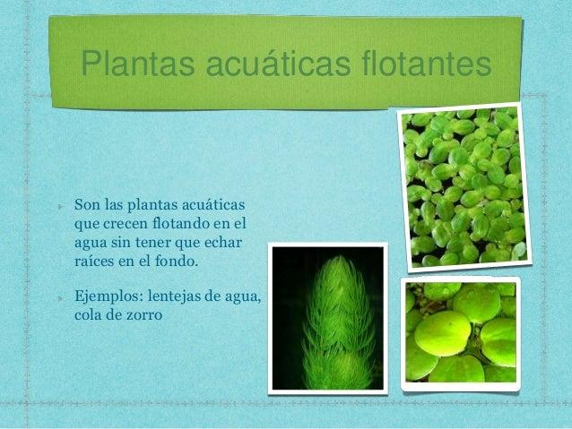 plantas acuáticas flotantes son las plantas acuáticas que crecen