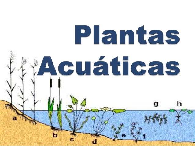 Las plantas acuáticas o micrófitos, son plantas adaptadas a los