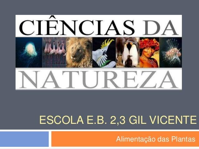 ESCOLA E.B. 2,3 GIL VICENTE Alimentação das Plantas