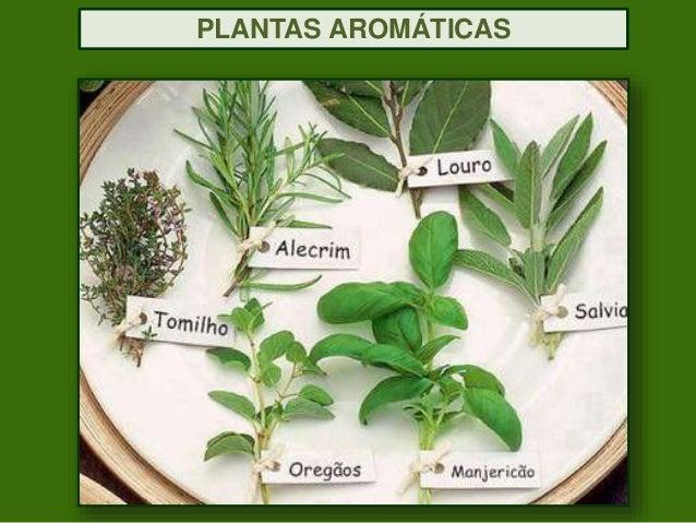 Plantas aromaticas beneficiosaude revisto - Cultivar plantas aromaticas en casa ...