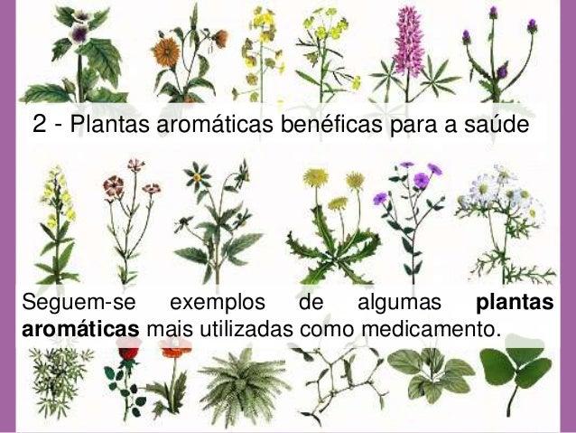 Plantas aromaticas beneficiosaude revisto for Asociacion de plantas aromaticas