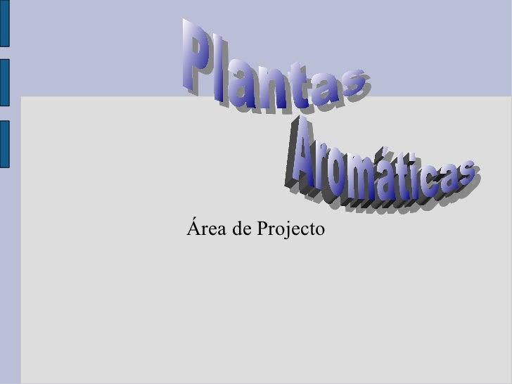 Área de Projecto Plantas  Aromáticas