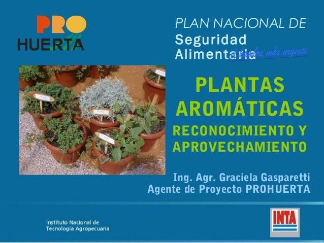 Plantas arom ticas cordoba for Jardinera plantas aromaticas