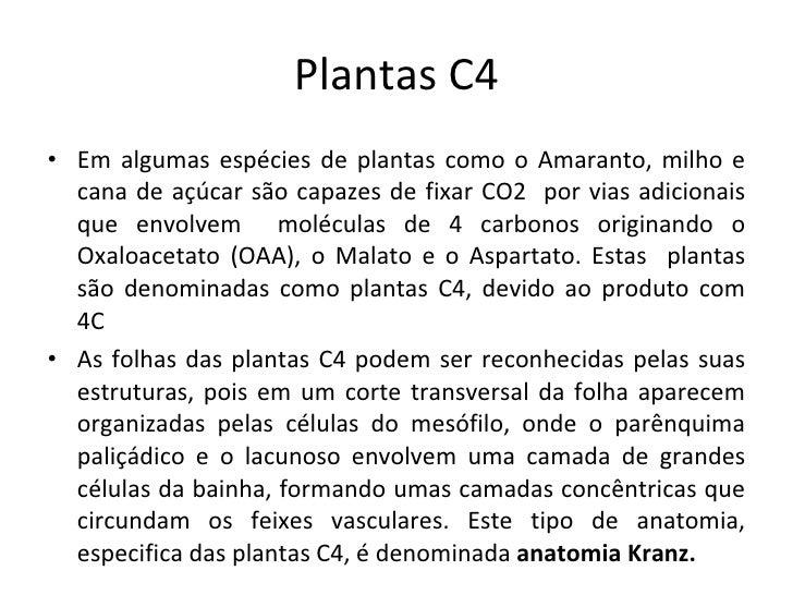 Plantas c4